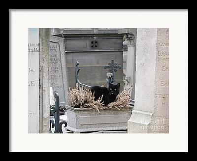 Black Cat On Grave Framed Prints