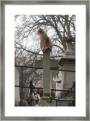 Paris Cemetery Cats - Pere La Chaise Cemetery - Wild Cats On Cross Framed Print by Kathy Fornal