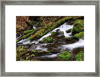 Paris Springs Framed Print