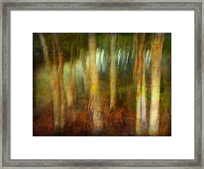 Framed Print featuring the photograph Park #8. Memory Of Trees by Alfredo Gonzalez