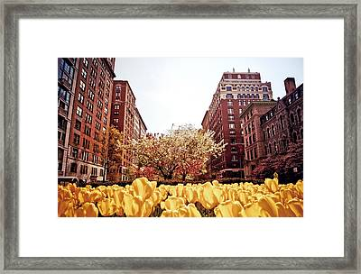 Park Avenue In The Spring  Framed Print