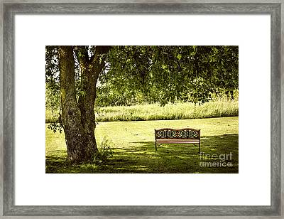 Park Bench Under Tree Framed Print