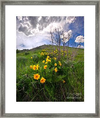 Park City Slopes In Spring Framed Print by Matt Tilghman