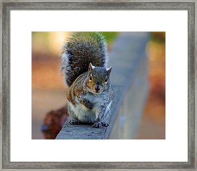 Framed Print featuring the photograph Park Squirrel I by Daniel Woodrum