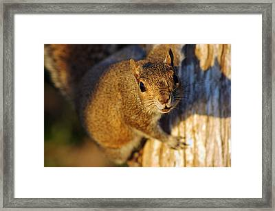 Framed Print featuring the photograph Park Squirrel II by Daniel Woodrum