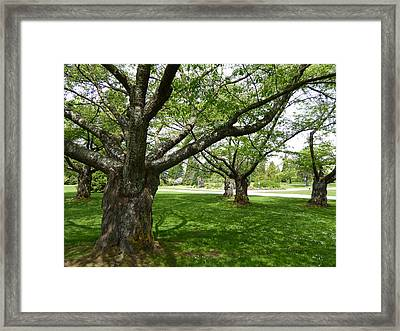 Framed Print featuring the photograph Park Trees by Laurie Tsemak