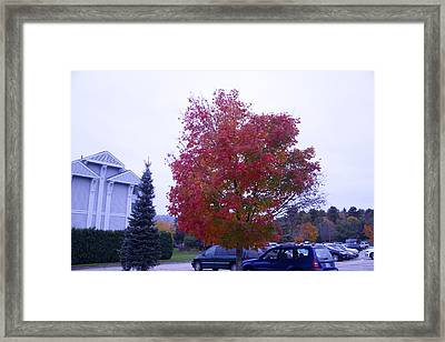 Parked Under Red Tree Framed Print by Dick Willis