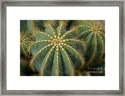 Framed Print featuring the photograph Parodia Magnifica by Scott Lyons