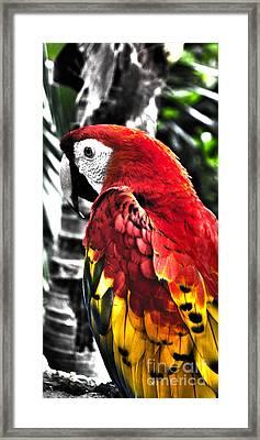 Parot Framed Print