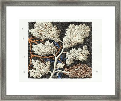 Parotid Salivary Gland Framed Print by Science Photo Library