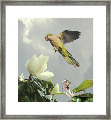 Parrot And Magnolia Tree Framed Print