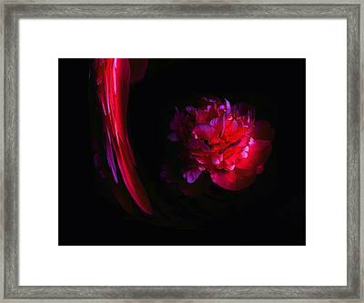 Parrot And Paeony Illusion Framed Print by Stephanie Grant