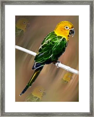 Parrot Beauty Digital Artwork Framed Print
