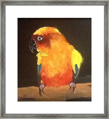 Parrot Framed Print by Catherine Swerediuk