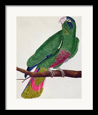 Naturelle Framed Prints