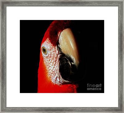 Framed Print featuring the photograph Parrot by Gunter Nezhoda