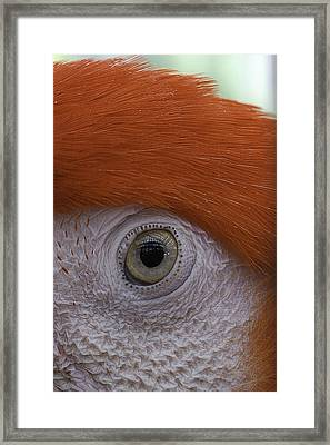 Parrot In Greenhouse No.1 2013 Framed Print