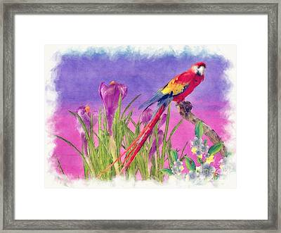 Parrot Framed Print by Liane Wright