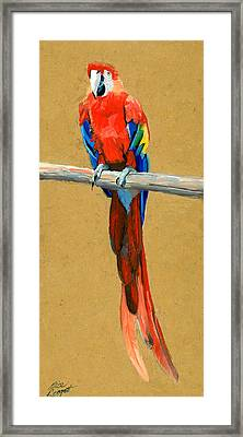 Parrot Perch Framed Print by Alice Leggett