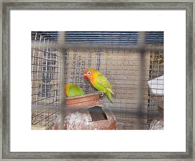 Parrot Framed Print by Prashant Ambastha