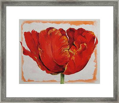 Parrot Tulip Framed Print by Michael Creese