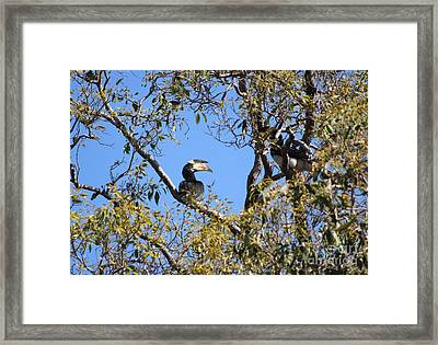 Hornbills With A Black Eye Framed Print by Four Hands Art