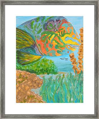 Parrotfish In The Coral Framed Print by Connie Campbell Rosenthal