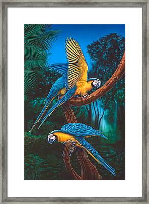 Parrots 2 Framed Print by Larry Taugher
