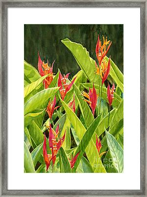 Parrots Flower With Dark Background Framed Print by Sharon Freeman