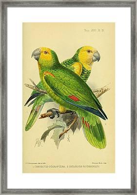 Parrots Framed Print by Rob Dreyer