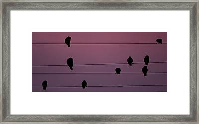 Parrots Online Framed Print by Avian Resources