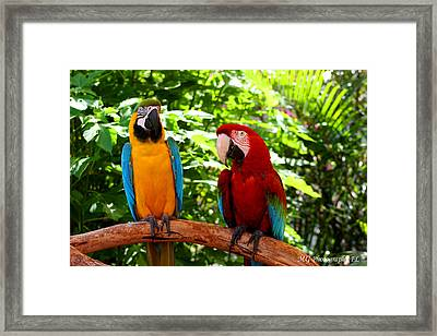 Framed Print featuring the photograph Parrot's Perch by Marty Gayler