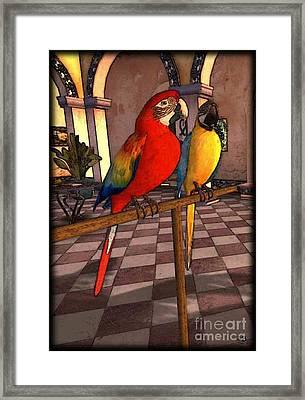 Parrots1 Framed Print