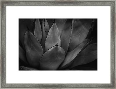 Framed Print featuring the photograph Parrys Agave  by Ben Shields