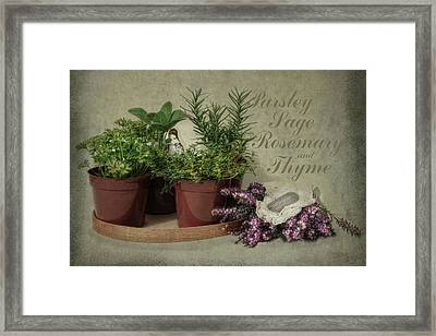 Parsley Sage Rosemary And Thyme Framed Print by Robin-Lee Vieira