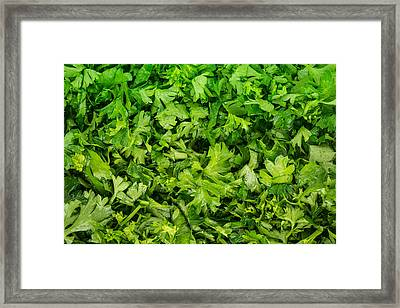 Parsley Framed Print by Steve Gadomski
