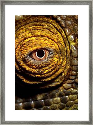 Parson's Chaemeleon Eye Framed Print by Alex Hyde