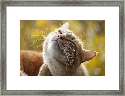 Part Of Scratching Cat Framed Print by Appu Shaji / Eyeem