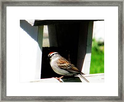 Partial Red On Top Framed Print by Tina M Wenger