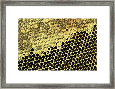 Partially Capped Honeycomb Framed Print