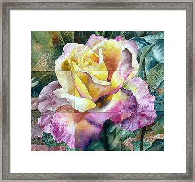 Partitioned Rose  Framed Print by Anne Gifford