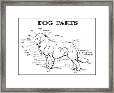 Parts Of A Dog 2 -- 1919 Framed Print