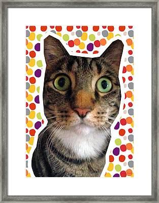 Party Animal- Cat With Confetti Framed Print by Linda Woods