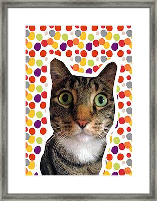 Party Animal - Smaller Cat With Confetti Framed Print by Linda Woods