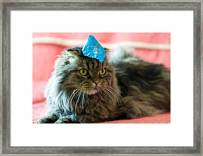 Party Cat Framed Print