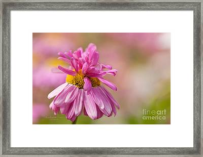 Party Girl Framed Print by Beve Brown-Clark Photography