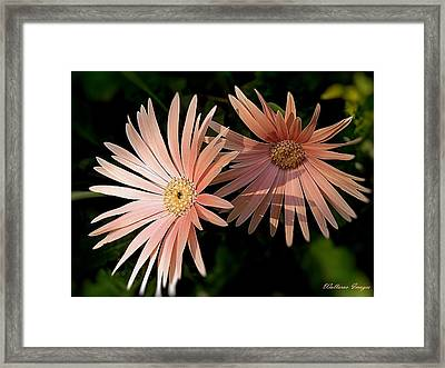 Party Girls Framed Print by Wallaroo Images