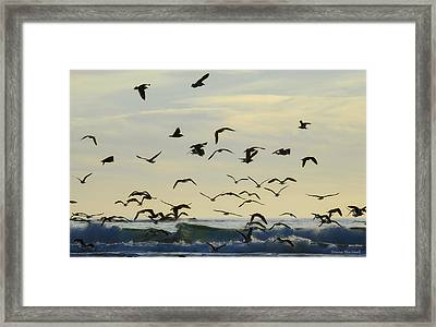 Party Is Over Framed Print by Donna Blackhall