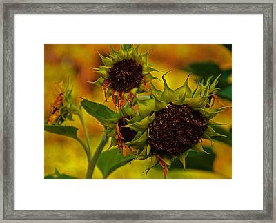 Party's Over Framed Print by John Harding