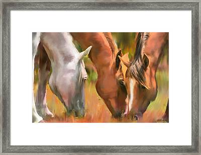 Pascolo Framed Print
